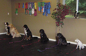 Therapy Dog Training and Testing | Olympic Mountain Pet Pals